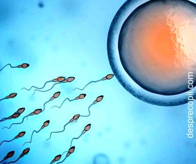 Embryoglue, inovatie pentru transferul embrionilor in uter