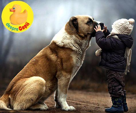 Boli pe care le pot lua copiii de la cainii maidanezi