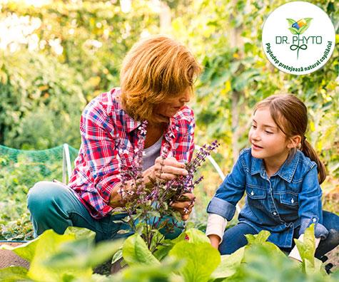 Cum sa-ti inveti copiii despre plante. Sfaturile ursuletului Deppy