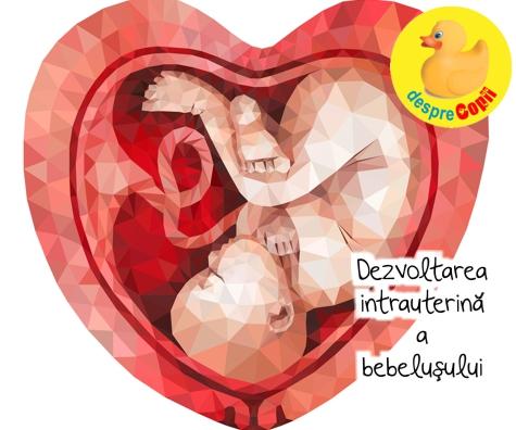 Dezvoltarea intrauterina a bebelusului