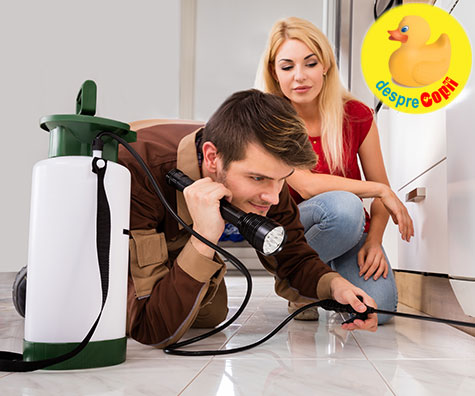 Cum sa iti cureti casa de paraziti fara chimicale?
