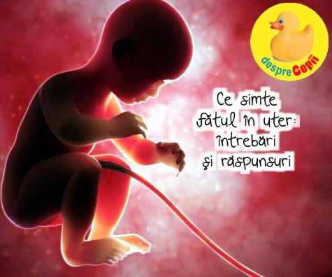 Ce simte fatul in uter: intrebari si raspunsuri