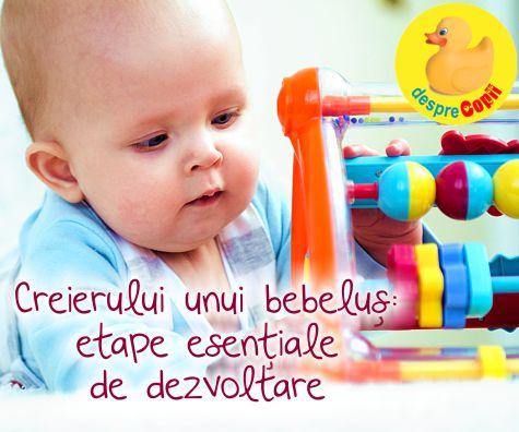 Etape esentiale de dezvoltare a creierului unui bebelus