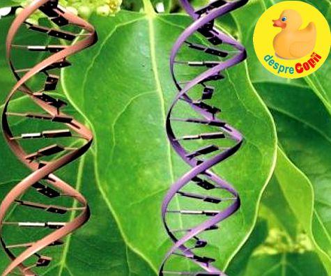 Ce fel de gene vegetale ai putea avea?