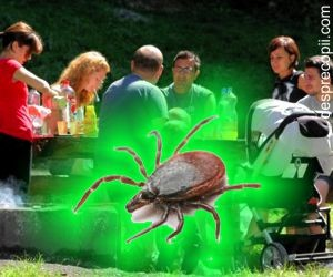 Cum iti feresti familia de boala Lyme cand esti la gratar
