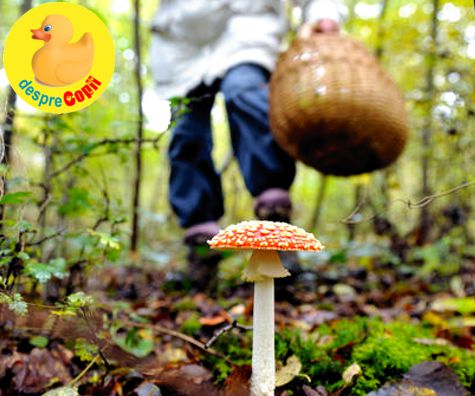 Intoxicatia cu ciuperci: semne si tratament