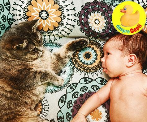 Cum facem cunostinta pisicii cu nou-nascutul