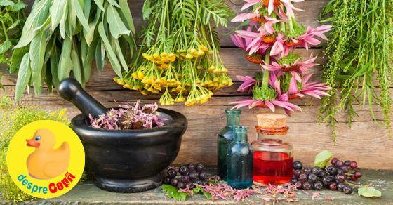 Plante interzise si nerecomandate in timpul sarcinii width=