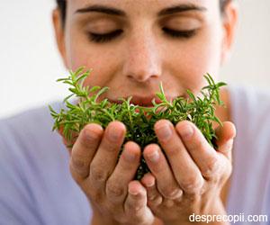 11 Plante magice care previn stresul